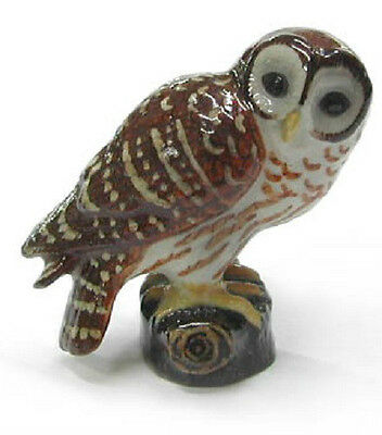 R279 Northern Rose Miniature - Barred Owl