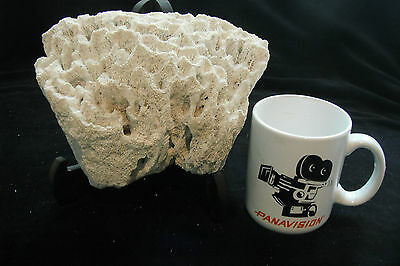 "Huge Vintage White Coral Authentic 8""x6""x4"""