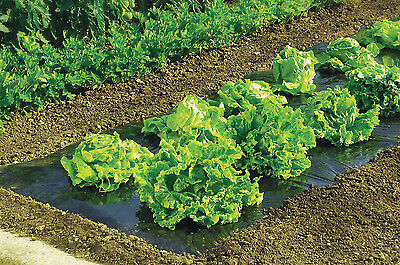 Biodegradeable Weed Control Mulch Film allotments veg patch borders 10m x 1.5m