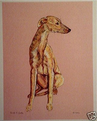 Print of Pastel of Whippet pup sitting greyhound