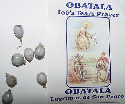 7 x JOB'S TEARS - TALISMAN Wicca Pagan Witch Money Luck SEEDS FOR WISH MAGIC