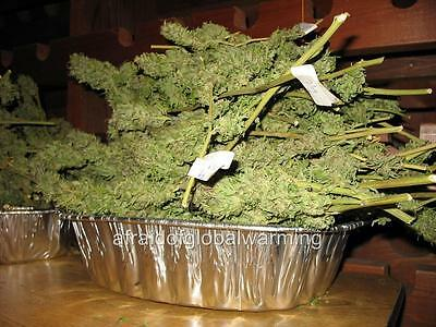 Photo.  2000s. Pan Of Dried Marijuana