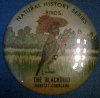 NATURAL HISTORY SERIES : BIRDS 3 INCH PINBACK BUTTON The Blackbird