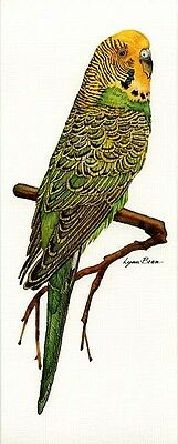 Green and Yellow Parakeet / Budgie - 6x15 In. Art Print