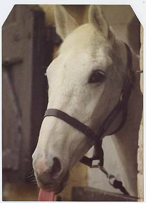 Scarce Trade Card of Desert Orchid, Horse Racing 1997