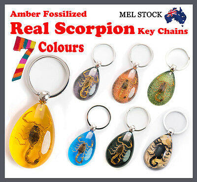 Amber Fossilized Real Bug/Scorpion Men's/Women's Key Chain Ring Car Keyring