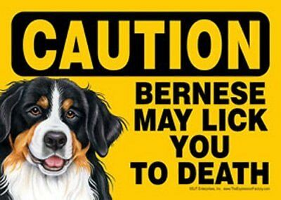 """Bernese (Mountain Dog) May Lick You to Death Humorous Dog Sign - 7"""" x 5"""""""