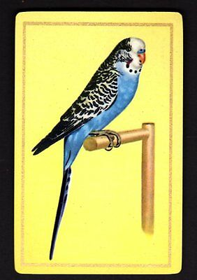 Vintage Swap/Playing Card - Blue Budgerigar