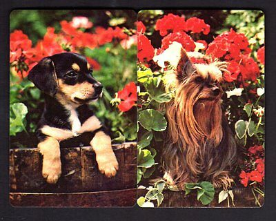 Vintage Swap/Playing Cards - Gorgeous Puppies Outdoors Pair