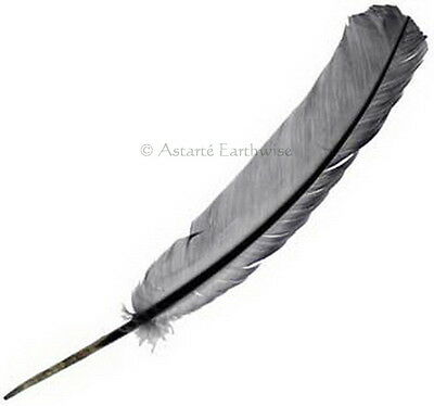 1 x SILVER GREY FEATHER QUILL Magical Writing Craft Wicca Pagan Witch Goth
