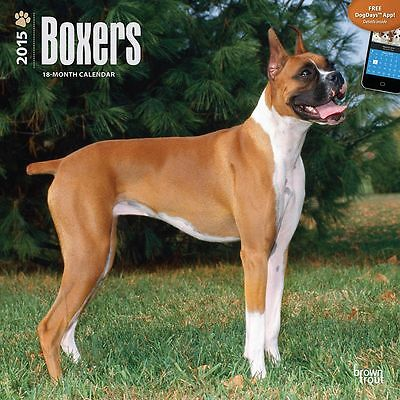 2015 Boxers Wall Calendar BrownTrout