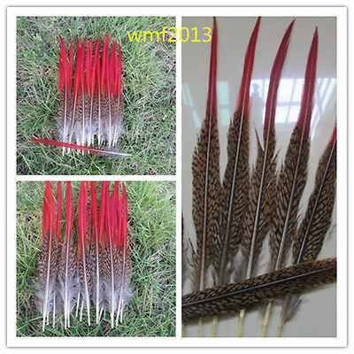 Wholesale beautiful golden pheasant red feathers 4-12 inches long 15-30cm