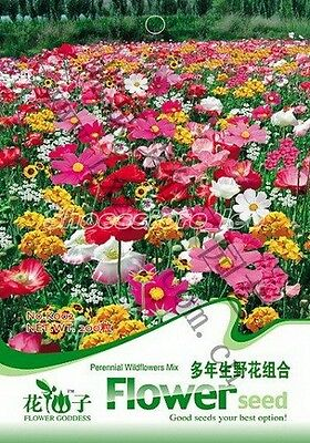 1 Bag 200 Seeds Colorful Perennial Wild flowers Mix Seed K002