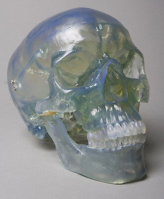 Clear Ice-Blue Life-Size Human Skull, Halloween Horror Prop, Skulls NEW
