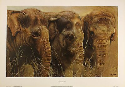 "MARK WHITTAKER ""Young Ones"" ELEPHANTS wildlife art SIZE:36cm x 57cm  RARE"