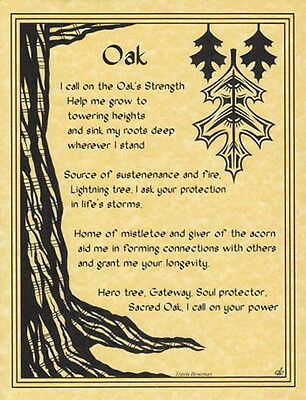 OAK POSTER A4 SIZE Wicca Pagan Witch Witch Goth BOOK OF SHADOWS