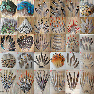 Wholesale beautiful all kinds of different natural pheasant feather