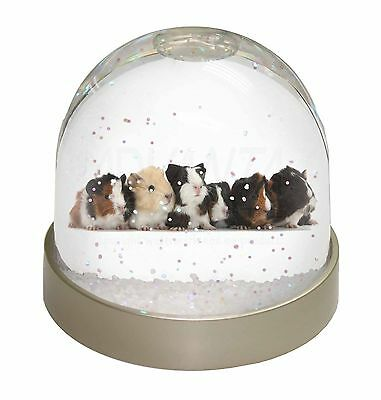 Baby Guinea Pigs Snow Dome Globe Waterball Gift