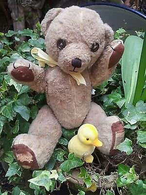 "Vintage antique 13"" chad valley teddy bear with original label"