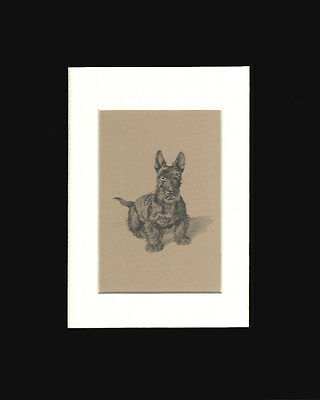 Scottish Terrier Dog  Print 1934  by Cecil Aldin 8x10 Double Black & White Mat