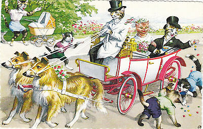 Wedding Anthropomorphic Cats Art Postcard by Hartung © A. Mainzer 4920 NY