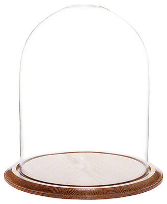 "Plymor Brand 11.75"" x 15"" Glass Display Dome Cloche (Oak Wood Base)"