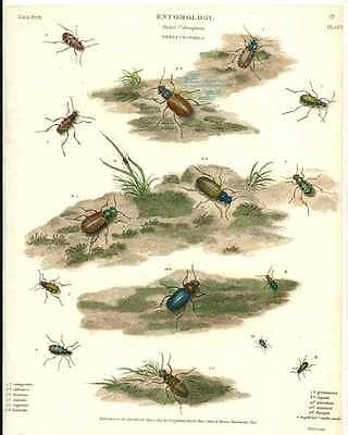 Entomology: Rees antique print of Coleoptera Beetles. Plate 2, c1814.