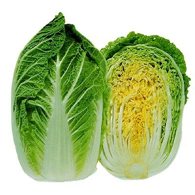Heirloom MICHIHILI Napa Chinese Cabbage❋4000 SEEDS❋Asian Greens❋COMBINE SHIPPING