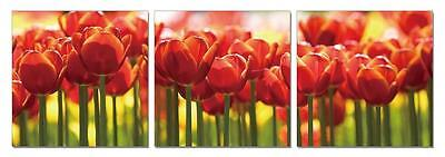 "47"" FRAMED Hot Modern Contemporary Canvas Wall Art Print Flowers Tulip Red"