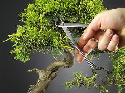 Professional Quality Stainless Steel Bonsai Tools - Knob Cutters 175mm