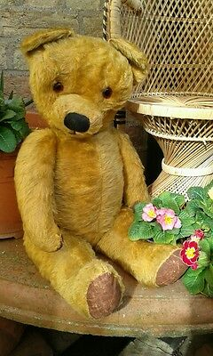 "Antique chad valley? large jointed 26"" tall golden mohair teddy bear 1940s"
