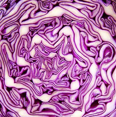 SWEETHEART RED CABBAGE - REDRUTH - multiples of 100 seeds custom packed to order