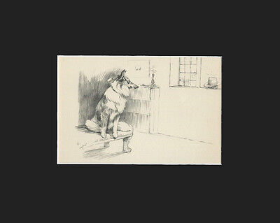 Vintage Cecil Aldin 1939 Print: Collie Dog Matted Looking Out the Window