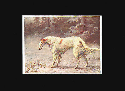 Antique Print 1907 Borzoi Dog by Lilian Cheviot  9X12 Matted