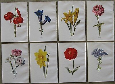 LOT of 8 Hulme Antique Botanical Prints - DAY LILY, PINKS, DAFFODIL, ZINNIA +