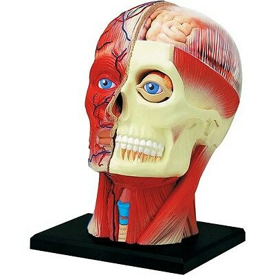4D Human HEAD Skull Brain eye Body Anatomy 3D Puzzle Model science Medical NEW