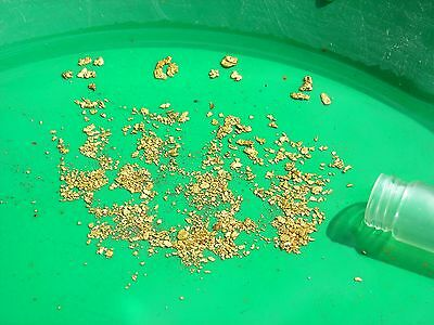 1 lbs of Gold Concentrates - Panning PayDirt Guaranteed nuggets/pickers flakes