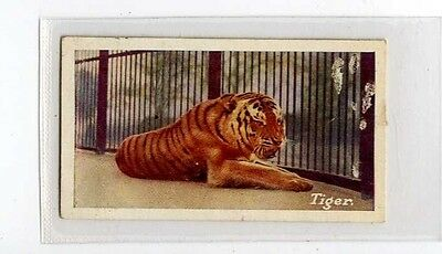 (Jb1749-100)  JACOBS,ZOO SERIES(GREEN),THE TIGER,1924#13