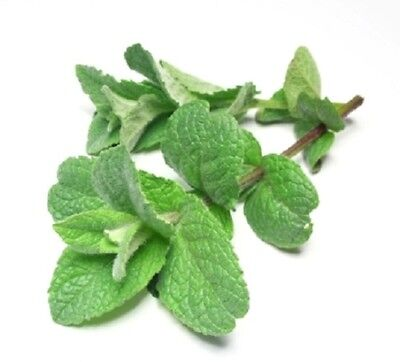 Peppermint 100% Pure Essential Oil 10ml, 25ml, 50ml, 100ml, 500ml, 1litre