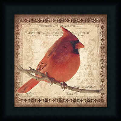 Male Cardinal Red Bird Sitting on Branch Framed Art Print Wall Décor Picture
