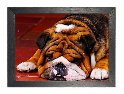 POSTER PRINT GIANT PHOTO NATURE ANIMAL PET FRENCH BULLDOG DOG PUPPY CUTE PAMP185