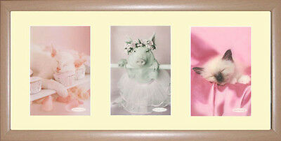 Cats Framed Photographs PB0468