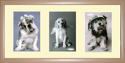 Dogs Framed Photographs PB0475