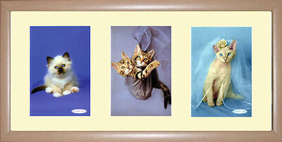 Cats Framed Photographs PB0476