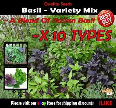 Basil Variety Mix 250 Seeds Minimum. 10 Types. Garden Herbs. Great in Italian.