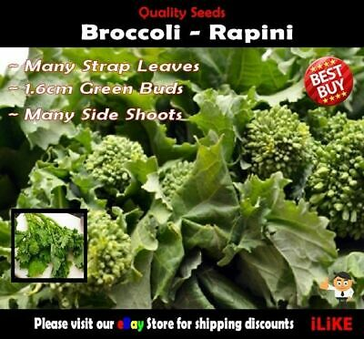 Broccoli Rapini 100 Seeds Minimum. Vegetable Garden Plant. Use In Many Dishes