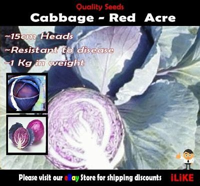 Cabbage Red Acre 100 Seeds Minimum. Vegetable Garden Plant. Very Large Heads.