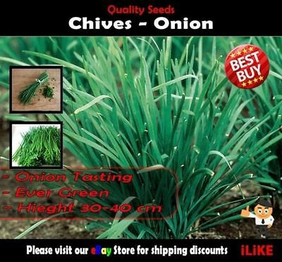 Chives Onion 100 Seeds Minimum. Vegetable Garden Herb. Easy to Grow Perennial.