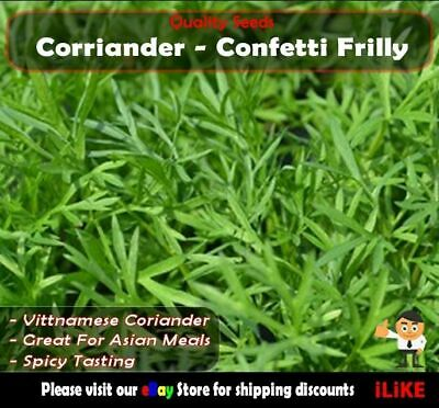 Coriander Confetti Frilly 50 Seeds Minimum. Vegetable Garden Herb. Veitnamese.