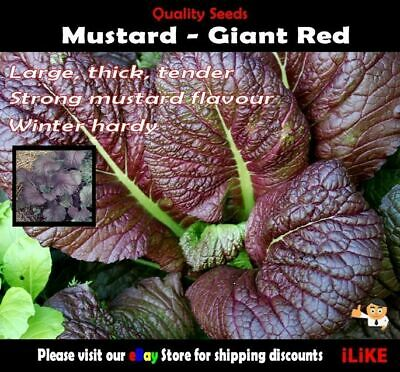 Mustard Giant Red 100 Seeds Minimum Vegetable Garden Herb Spicey Strong Flavour